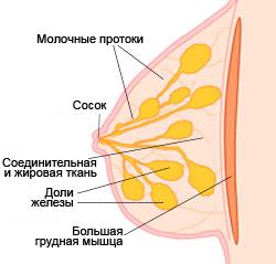 Rinna ehitus 1 RUS